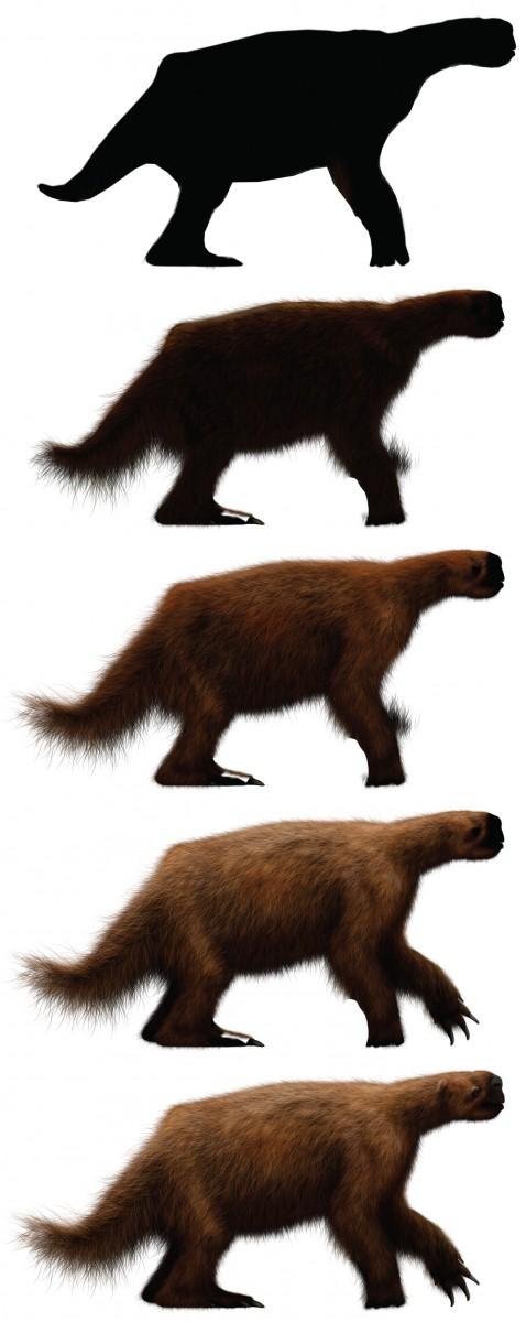 sloth-01